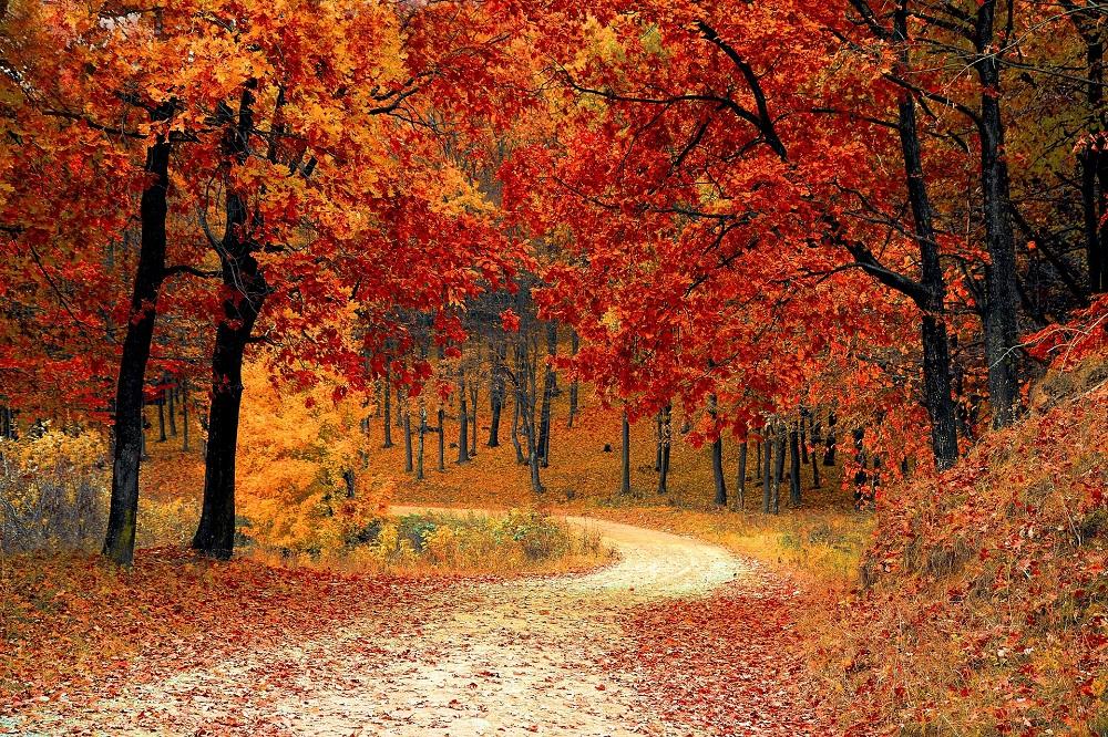 Herbst im Mühlviertel und im Böhmerwald - Hotel Almesberger****S