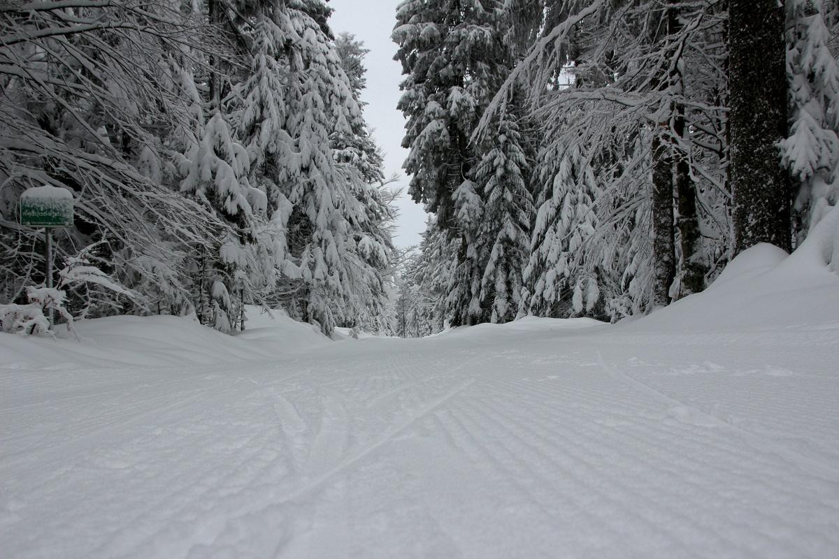 Wintersport Böhmerwald - Hotel Almesberger****S