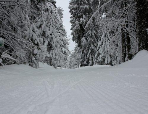 Langlaufen im Mühlviertel für Anfänger