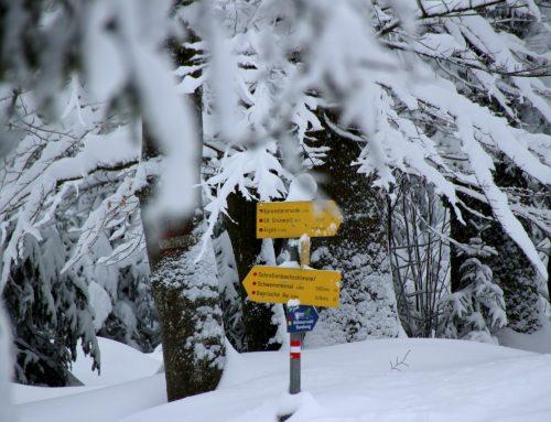 Winterwandern im Mühlviertel